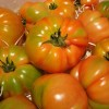 FAECA pide retirar del mercado un 25% del pepino holandes y tomate cherry