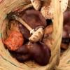 Arranca la temporada de recogida de setas en la Sierra de Baza
