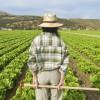 Las exportaciones agrarias crecen en Andalucía un 7 % hasta abril
