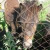 Imputan al propietario de unos animales abandonados y desnutridos en Padul