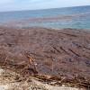 AUDIO y GALERÍA: Las playas de Granada siguen llenas de escombros una semana después de la riada