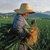Homenaje sonoro a la mujer rural