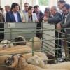 La oveja lojeña, una exquisitez para el mercado árabe
